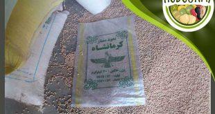 فروش نخود ممتاز کرمانشاه