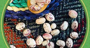 اطلاع از قیمت لوبیا چیتی در بازار
